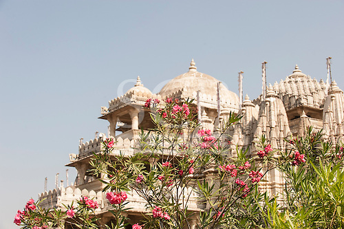 India; road from Udaipur to Jodhpur. Ranakpur Jain Temple and pink  Oleander flowers.