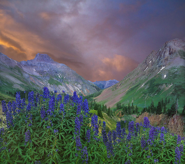 Sunrise in Yankee Boy Basin, Ouray, Colorado.