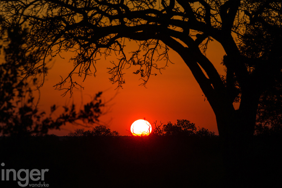 Sunset in Sabi Sands Private Game Reserve, South Africa