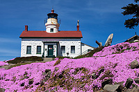 Flowers bloom at the Battery Point Lighthouse which sits outside the Crescent City harbor along the Northern california coast. On December 10, 1856 the lighthouses original fourth order Fresnal lens first illuminated the night sky an remained active until the lighthouse was automated in 1953 and its original lens replaced by a modern 375 mm lens. Access to the onsite museum and lighthouse is accessible only at low tide across an exposed land bridge