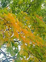 leaves beginning to turn yellow