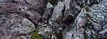 Lichens and Rocks