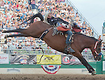 Brian Bain from Powell Butte, OR competes in the Bareback Bronc riding event at the Reno Rodeo on Saturday, June 20, 2015.