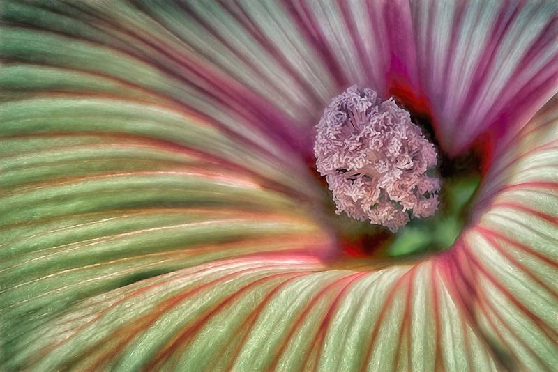 hybiscus,closeup,close up,close-up,close ups,close-ups,close ups,closeups,extreme close-up,macro,garden,gardens,flower,flowers,plant,plants,growth,growing ,botanic,botanics,botanical,botany,flowering plants,flowering plant, ,flora,floras,floral,bloom,blooming,blooms, blossoms, botanical garden,horticulture,landscaping,flower garden,stamen,pistil,petal<br />,petals,