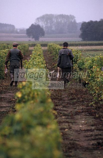 Europe/France/Centre/41/Loir-et-Cher/Env Soing: Chasse dans le vignoble - AUTO N°A34-A35 - Chasseurs et chien de chasse