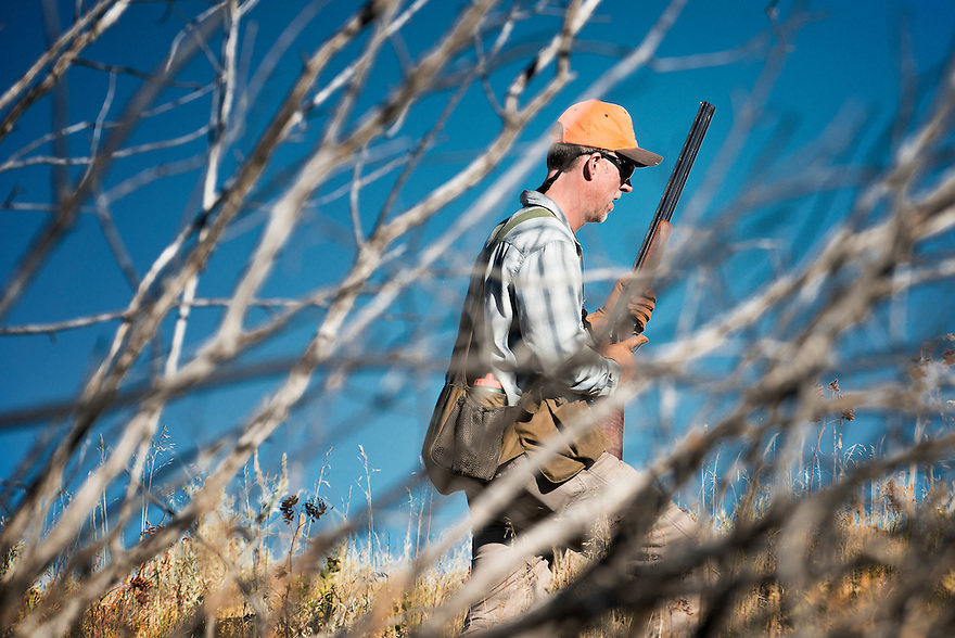 David Thompson, of Bozeman, Montana, pheasant hunts through thick cover near the Missouri River Breaks.