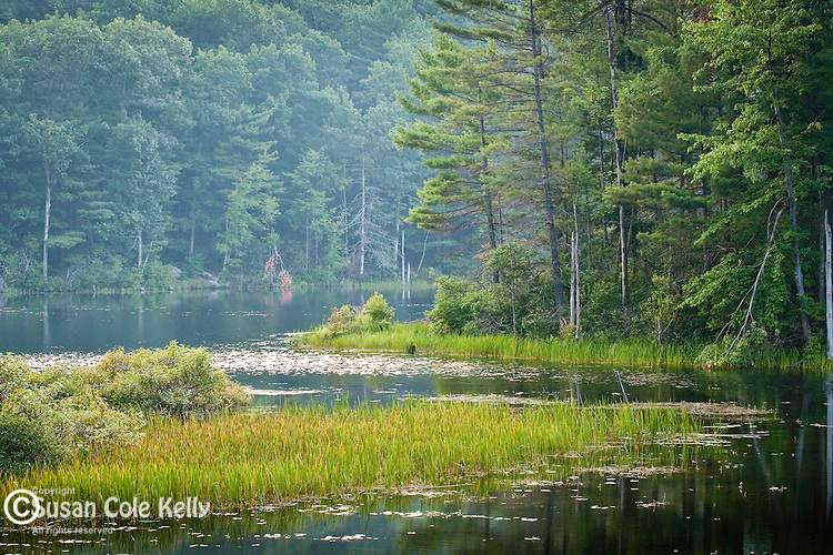 Paradise Pond in Leominster State Forest, Leominster, MA, USA