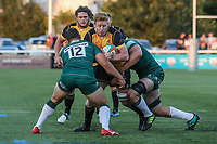 Tom Denton of Ealing Trailfinders during the Greene King IPA Championship match between Ealing Trailfinders and London Irish Rugby Football Club  at Castle Bar, West Ealing, England  on 1 September 2018. Photo by David Horn.