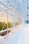 September 9, 2014. Research Triangle Park, North Carolina.<br />  The tour hallways of the Advanced Crop Lab allow visitors to see the environments inside without interfering wight he work being down inside.<br /> The Syngenta Advanced Crop Lab is nearly one acre of advanced agricultural research under glass. The lab is capable of maintaining many different environments under its roof, allowing scientists to test the effects of various environmental elements on different crops and plants side by side.