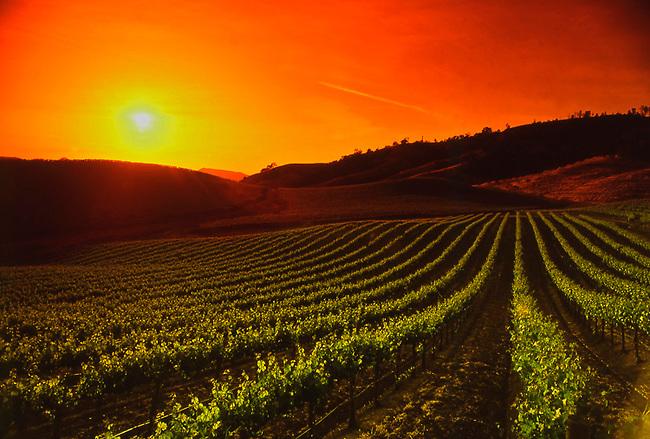 Sun sets on Napa Valley vineyard