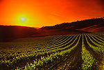 Sun sets on Napa Valley vineyard