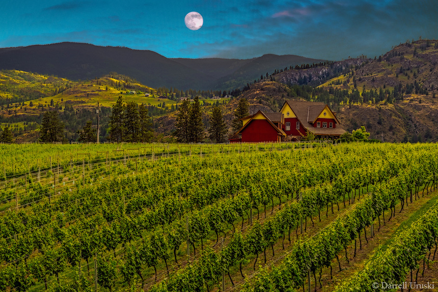 Fine Art Print Vineyard Scenic of a full moon over a picturesque winery is situated amongst the rolling hills and mountains in the beautiful Okanagan Valley of British Columbia Canada.The sun was just beginning to set behind the mountains and was casting a warm golden glow across the textured rows of vineyards.