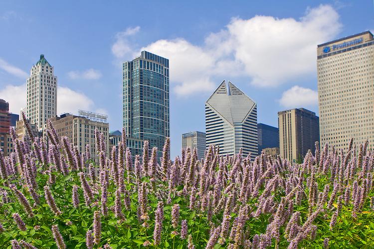 Chicago skyline behind beautiful flowers in Millennium Park, Chicago, Illinois