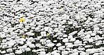 Flowers at the Mt Annan Botanic Gardens in Sydney, NSW, Australia