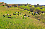 Drombeg stone circle, County Cork, Ireland, Irish Republic roundhouse Fulacht fiadh structure in foreground