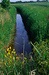 AREKJF Drainage ditch by the edge of a field Butley, Suffolk, England