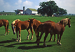 Amish homestead with horses in pasture, Lancaster Co. landscape, PA