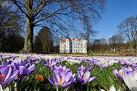 Schloss Ahrensburg und Krokus: EUROPA, DEUTSCHLAND, SCHLESWIG- HOLSTEIN 17.03.2009:  Ahrensburg, alt, alte, alter, altes, am, Architektur, Ausflugsziel, Ausflugsziele, aussen, Aussenansicht, Aussenansichten, Aussenaufnahme, Aussenaufnahmen, Bauwerk, Bauwerke, bei, bluehend, bluehende, bluehender, bluehendes, blueht, Bluete, Blueten, Blume, Blumen, Blumenart, Blumenarten, Blumensorte, Blumensorten, Blumenwiese, Blumenwiesen, Botanik, bunt, bunte, bunter, buntes, Crocus, Deutschland, draussen, farbig, farbige, farbiger, farbiges, Flora, Fruehling, Fruehlingsbote, Fruehlingsboten, Gebaeude, historisch, historische, historischer, historisches, Holstein, im, Iridaceae, Kreis, Krokus, Krokusse, Lilienaehnliche, Liliidae, menschenleer, Natur, niemand, Park, Parks, Pflanze, Pflanzen, Pflanzenkunde, Schleswig, Schleswig-Holstein, Schloesser, Schloss, Schlosspark, Schlossparks, Schwertliliengewaechs, Schwertliliengewaechse, sehenswert, Sehenswuerdigkeit, Sehenswuerdigkeiten, Stadt, Stormarn, Tag, Tage, Tageslicht, tagsueber, Touristenattraktion, Touristenattraktionen, verschiedenfarbig, verschiedenfarbige, verschiedenfarbiger, verschiedenfarbiges, von, Wasserschloesser, Wasserschloss, Wiese, Wiesen.c o p y r i g h t : A U F W I N D - L U F T B I L D E R . de.G e r t r u d - B a e u m e r - S t i e g 1 0 2, .2 1 0 3 5 H a m b u r g , G e r m a n y.P h o n e + 4 9 (0) 1 7 1 - 6 8 6 6 0 6 9 .E m a i l H w e i 1 @ a o l . c o m.w w w . a u f w i n d - l u f t b i l d e r . d e.K o n t o : P o s t b a n k H a m b u r g .B l z : 2 0 0 1 0 0 2 0 .K o n t o : 5 8 3 6 5 7 2 0 9.V e r o e f f e n t l i c h u n g  n u r  m i t  H o n o r a r  n a c h  A b s p r a c h e, N a m e n s n e n n u n g  u n d  B e l e g e x e m p l a r !.