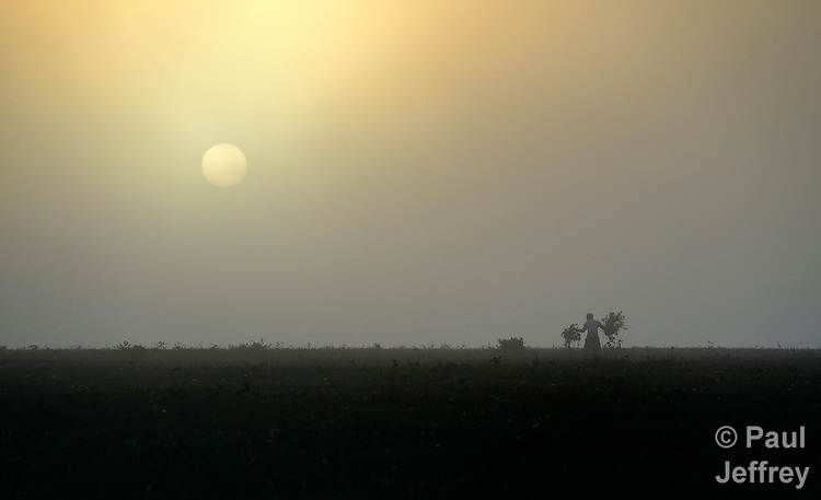A worker labors on a tea plantation in near Thyolo, in southern Malawi, as the sun rises through early morning fog.