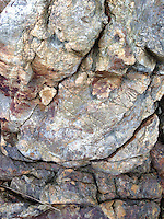 Rock Face Detail, Castine, Maine, US