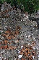 Europe/France/Aquitaine/33/Gironde/Listrac: Le terroir de graves de château Julien (AOC Haut-Médoc)