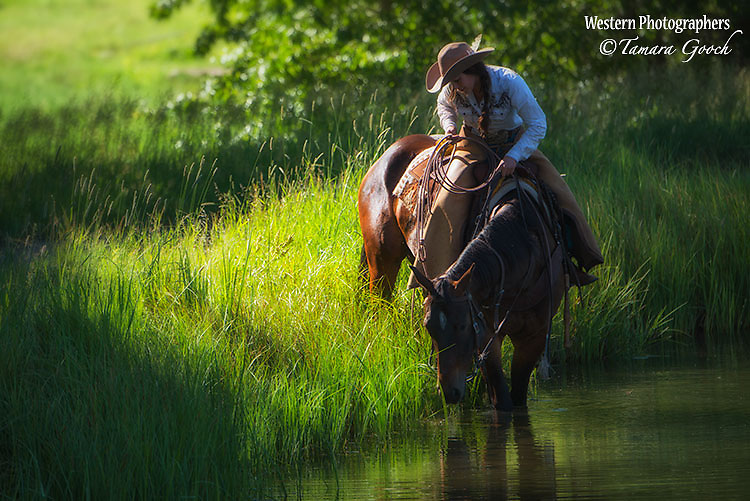 A cowgirl giving her horse a drink from a pond.
