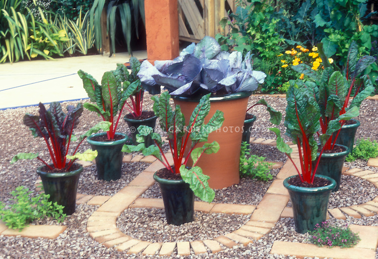 container vegetable gardening ideas pinterest cheap chard cabbage vegetables growing pots stone brick patio garden in the p