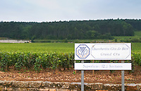 Vineyard. Chambertin Clos de Beze Grand Cru.  Gevrey Chambertin, Cote de Nuits, d'Or, Burgundy, France