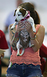Action from the Wiener Dog Races at the Reno Rodeo in Reno, Nev., on Saturday, June 28, 2014.<br /> Photo by Cathleen Allison