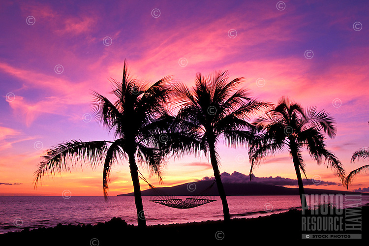 Palm trees and hammock with a spectacular sunset near Lahaina, Maui.