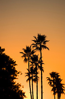 Palm Trees At Sunset In Orange County California