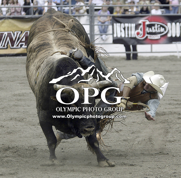 29 Aug 2004: PRCA Rodeo Bull Rider Myron Duarte ranked 5th in the world riding the bull Real Deal gets tossed during the PRCA 2004 Extreme Bulls competition in Bremerton, WA. Myron won the overall competition with a combined score of 17.