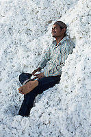 Labourer Ramkishan Paliwal, 21, takes a rest in the mountain of raw Fairtrade cotton after unloading it from a truck at a ginning factory that is contracted by Pratibha in Karhi, Khargone, Madhya Pradesh, India on 12 November 2014. Photo by Suzanne Lee for Fairtrade