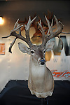 A deer head is seen at a taxidermy display at the Minnesota State Fair in Saint Paul, Minnesota on August 30, 2008.