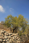 Israel, Shephelah, old terraces in Park Canada