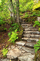 Stone stairs climbing through trees and ferns, Ladder Creek Falls Trail, Newhalem, Seattle City Light Company, Ross Lake National Recreation Area, Whatcom County, Washington, USA