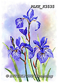 Kris, FLOWERS, BLUMEN, FLORES, paintings+++++,PLKKK3535,#f#, EVERYDAY