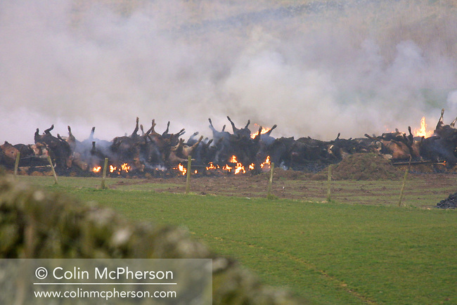 Carcasses of slaughtered cattle being burned in a field at Haugh of Urr in Dumfries and Galloway, as officials continue to take measures to contain the outbreak of foot-and-mouth disease in Scotland. The outbreak of foot-and-mouth disease in the United Kingdom in the spring and summer of 2001 caused a crisis in British agriculture and tourism and saw 2,000 cases of the disease in farms in most of the British countryside. Over 10 million sheep and cattle were killed in an eventually successful attempt to halt the disease.