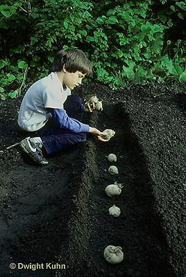 HS05-036z  Potato - child planting seed potatoes