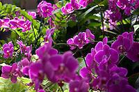 Bronx Botanical Garden
