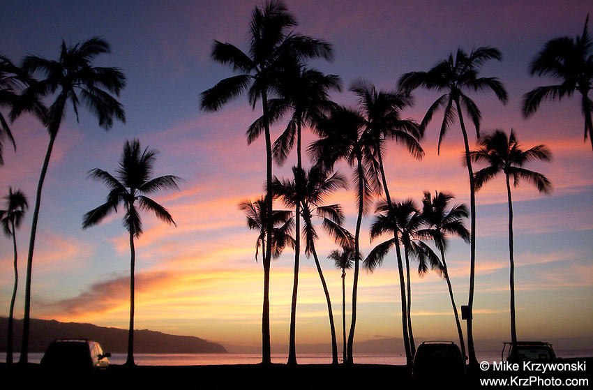 Colorful sunset w/ silhouetted palm trees in Haleiwa, Oahu
