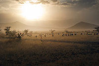 Tanzania: Serengeti Highway by Sven Trofinn