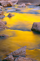 Reflected autumn light, Virgin River<br /> Zion Narrows<br /> Zion National Park<br /> Colorado Plateau,  Utah