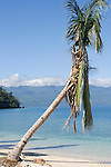 Vanua Levu, Fiji; palm trees and a white sandy beach at the edge of a lagoon over looking Somosomo Straight with Taveuni Island in the distance