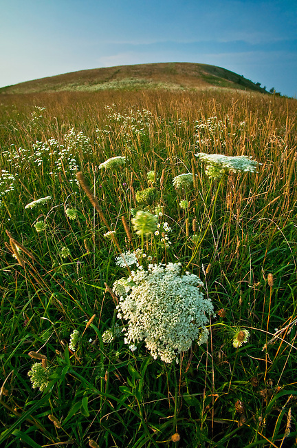 Summer wildflowers along the Appalachian Trail, Max Patch Mountain