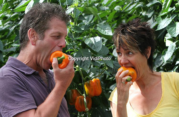 """Foto: VidiPhoto..SEVENUM - Paprikatelers Wim en Annette Hermans (foto) uit het Limburgse Sevenum hebben dé oplossing om het kwakkelende Nederlandse elftal zo vlak voor het EK weer nieuwe energie en inspiratie te geven: oranje paprika's. De energiebom bij uitstek bevat driemaal zoveel vitamine C dan een sinasappel en heet niet voor niets """"het lekkerste fruit onder de groenten"""". Oranje paprika's zijn bovendien door hun kleur 'hot' op dit moment en kunnen door milde, zoete en zachte smaak als een snack gegeten worden. Hollandser voedsel bestaat er op dit moment niet. """"Scoren met oranje"""" is daarom het motto van de Limburgse teler.."""