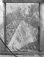 &quot;Broken Glass Pane&quot; Gibson Greenhouses, Maryville, Tennessee<br />