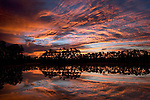 Daybreak at Long Pine Key, Everglades National Park, Florida