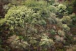 Northern coastal srub, Tennessee Valley, Mill Valley, Bay Area, California
