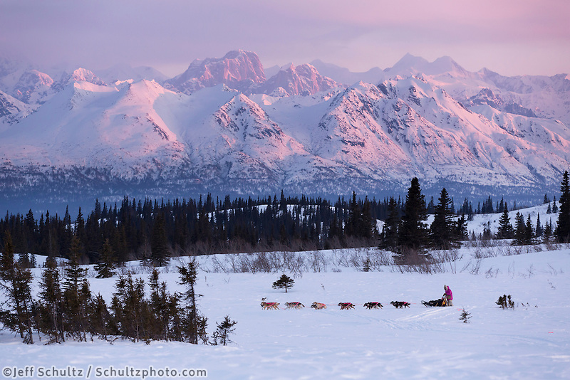 DeeDee Jonrowe mushes her dog team during a spring training run at dawn with Mt. Mckinley and the Alaska Range in the background.  Denali State park.  Southcentral, Alaska<br />
